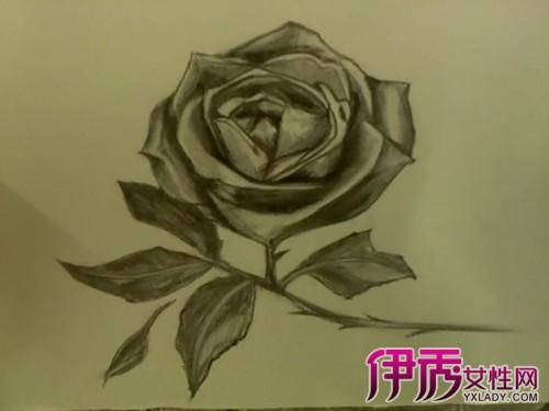 【素描玫瑰花画】【图】素描玫瑰花画法