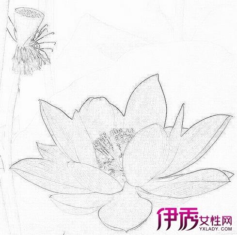 【手绘简单花卉黑白素描】【图】手绘简单花卉黑白