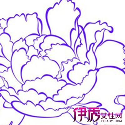 【铅牡丹花简笔画】【图】铅牡丹花简笔画曝光
