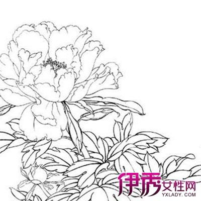 牡丹花花丛简笔画内容图片展示