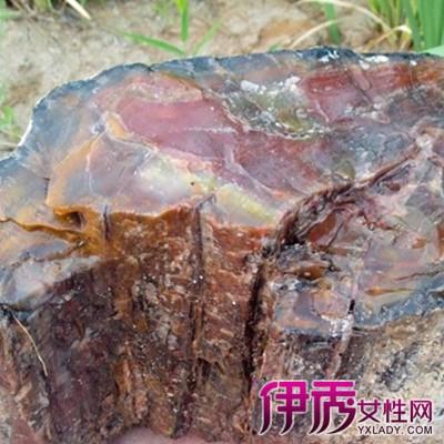 【图】展示树化玛瑙原石图片 钦佩大自然的鬼斧神工
