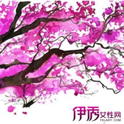 冬樱花水彩画
