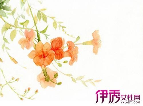 淡雅古风花朵图片 图片合集