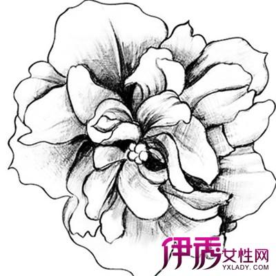 展示简单花的素描图片 让你轻松了解素描的分类和题材图片