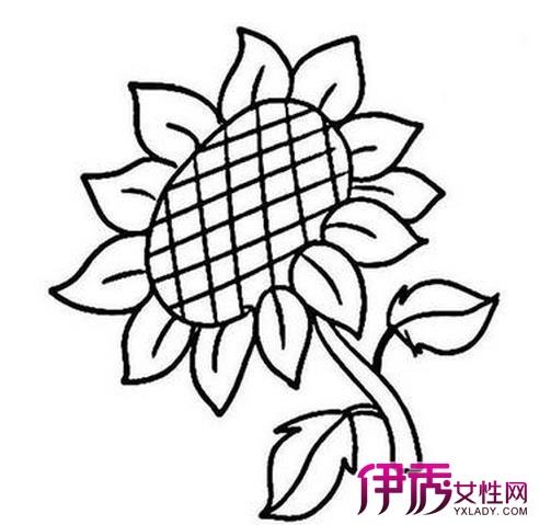 线条手绘花盆画