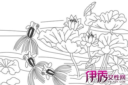 【金鱼的简单素描】【图】金鱼的简单素描图片展示