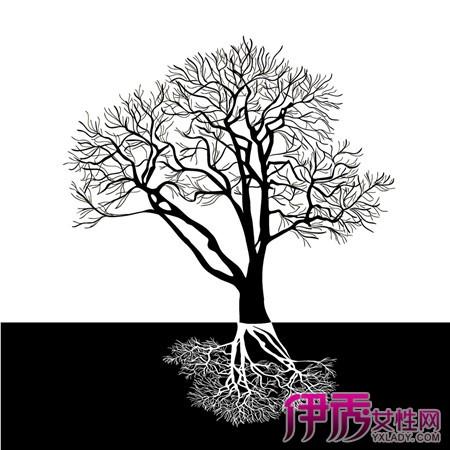 【图】赏析黑白植物插画图片 探讨插画的历史及表现手法