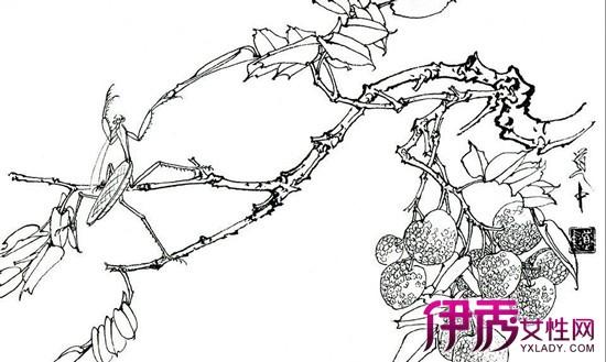 【图】工笔画牡丹白描图片欣赏 所画牡丹形备神达画风清新