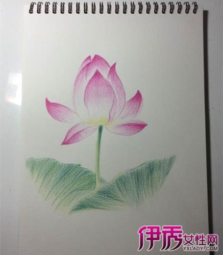 【图】小学手绘荷花彩铅画欣赏 6个步骤画出清新荷花