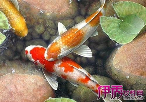 【手绘鲤鱼油画】【图】手绘鲤鱼油画图片展示图片