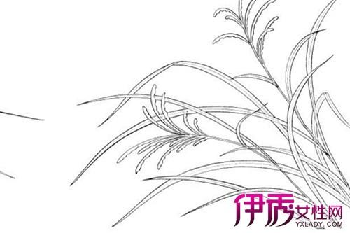 【图】简单的素描植物速写图片展示 速写的有哪些分类你知吗