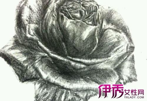 【图】炭笔画玫瑰图片展示 盘点素描用到的7大工具
