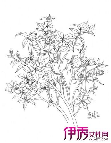 【图】桂花素描图 素描作画的题材及作画四步骤