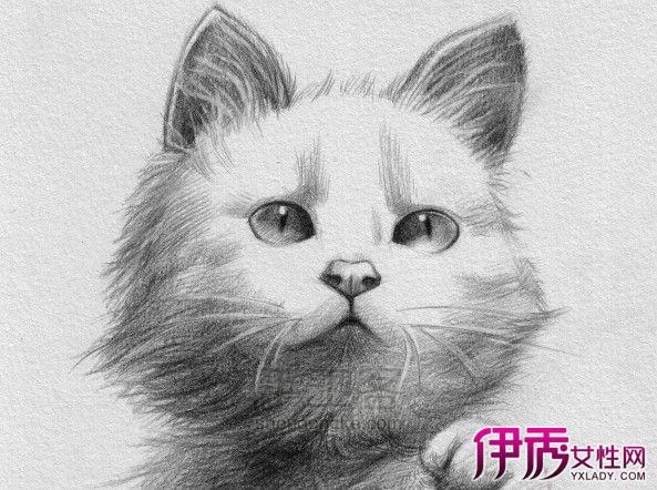 猫小萌素描画图片.可爱又卖萌的喵星人是不是你心中的挚爱呢?