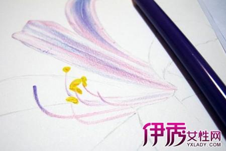 【简单彩铅手绘花朵画】【图】简单彩铅手绘花朵画