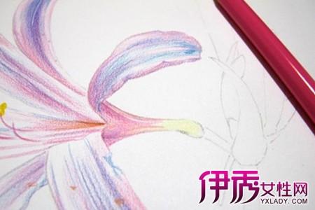 简单彩铅手绘花朵画 手把手教你学画画