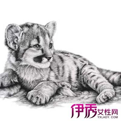 【图】素描动物图片欣赏 素描是一切绘画的基础