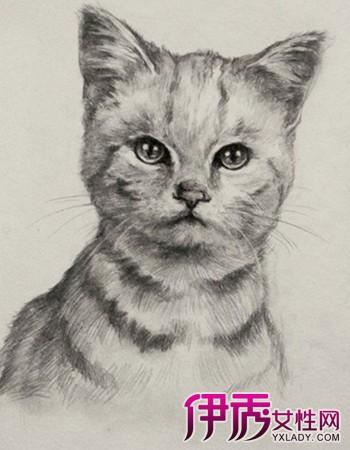 彩铅素描画可爱小猫