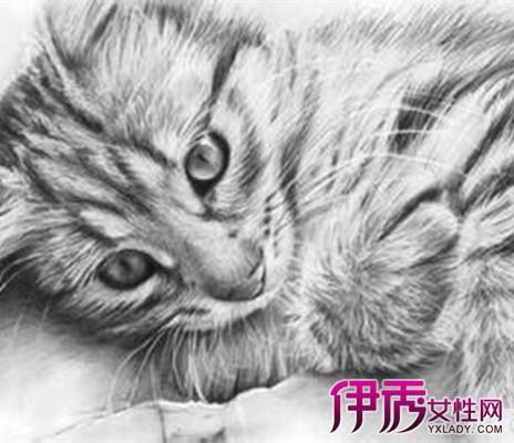 【图】各种素描动物图片 多种分类让你感受不一样的美