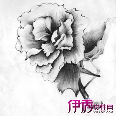 【玫瑰花素描】【图】玫瑰花素描图片大全