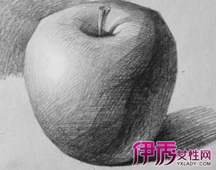 【苹果素描画】【图】探索苹果素描画的步骤图片