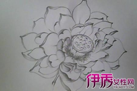 花瓶素描简笔画 花瓶素描图片欣赏