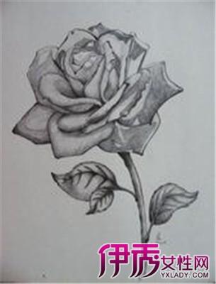 神奇素描 写实 玫瑰花展示