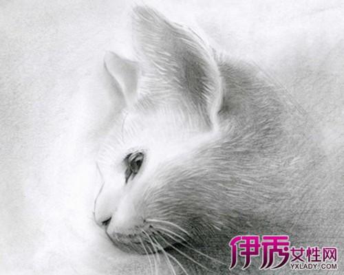 兔子的素描画法步骤