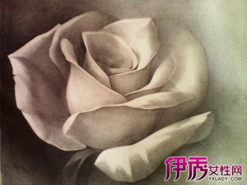 【素描玫瑰花】【图】素描玫瑰花图片鉴赏