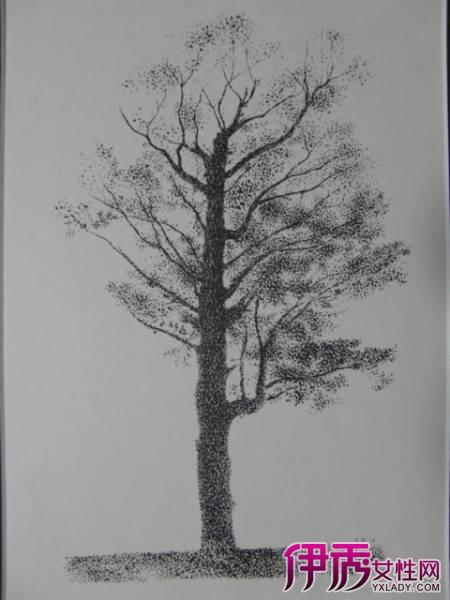树素描图片欣赏 素描教程之树干树叶的速写画法图片
