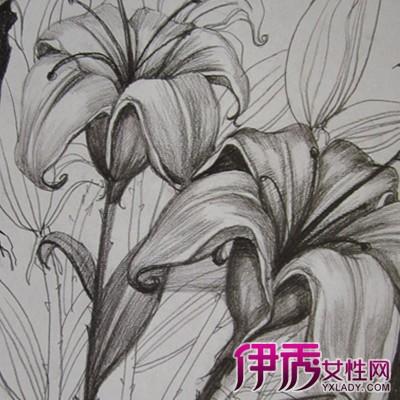 一样的花素描图-铅笔画花