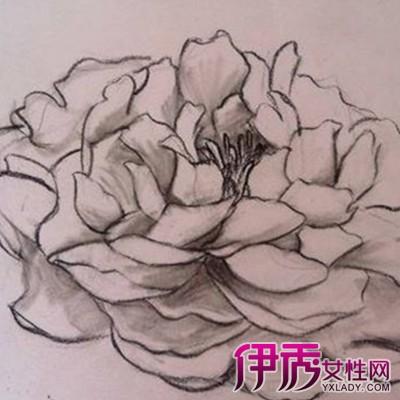 【图】手绘牡丹花朵素描图片展示 为你将素描分为两大类