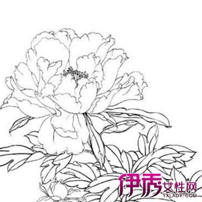 【手绘牡丹花朵素描】【图】手绘牡丹花朵素描图片