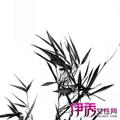 【素描竹子】【图】素描竹子的图片大全