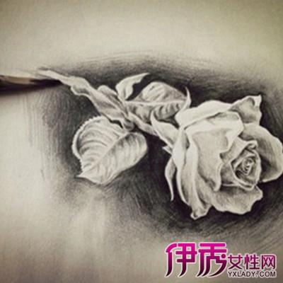 【玫瑰花素描画】【图】玫瑰花素描画欣赏