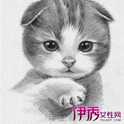 【图】展示猫猫素描图片 素描的几个常见题材揭秘