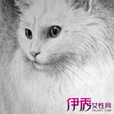 【图】展示素描画猫图片 为你介绍素描的几个工具