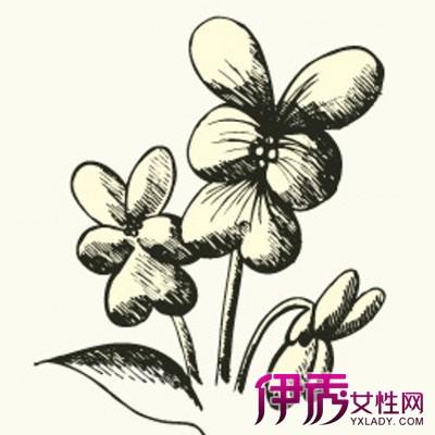欣赏好看简单素描花朵图片 为你介绍素描的几个分类图片
