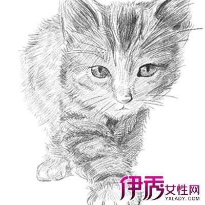 【素描猫咪图片】【图】三只可爱的素描猫咪图片欣赏