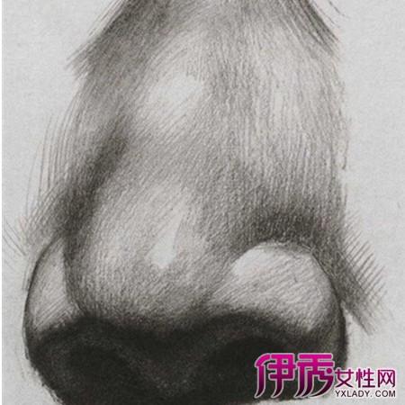 鼻子素描图片步骤图大全 素描的技法和作画步骤介绍图片