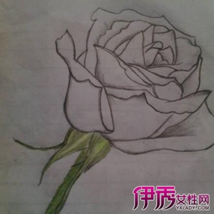 玫瑰素描画法步骤图片介绍 以下方法教你如何素描画玫瑰图片