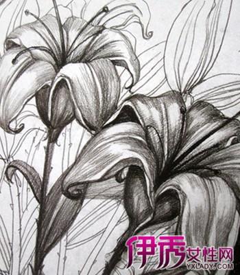 【图】花朵素描图片欣赏 素描的6种技法揭秘