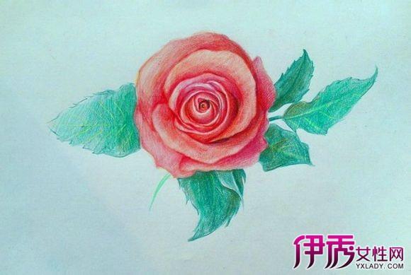 【彩铅手绘玫瑰花图片】【图】铅手绘玫瑰花图片欣赏