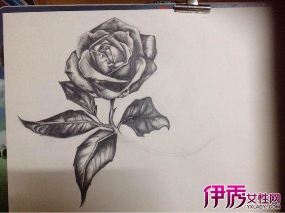 【图】铅手绘玫瑰花图片欣赏 为你介绍手绘有关知识点