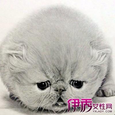 【图】欣赏素描猫的图品 掌握透视方法学会素描