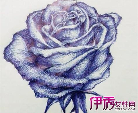 小玫瑰怎么画铅笔小玫瑰的彩色铅笔画 高手教教呀,怎么画素描的玫瑰花