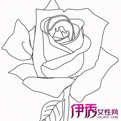 【图】欣赏盛开玫瑰花简笔画图片 为你介绍怎样简笔画玫瑰花好看