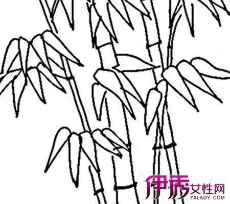 【图】手绘竹子简笔画欣赏