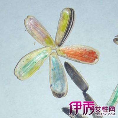 【漂亮手工瓜子粘贴画】【图】怎么制作漂亮手工瓜子