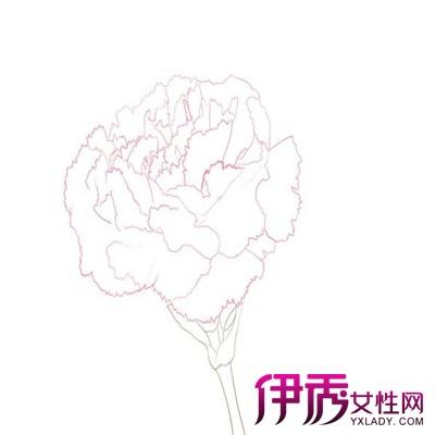 【图】分享康乃馨简笔画 带您领略简笔画的韵味